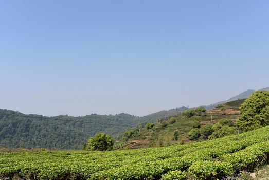 Xishuangbanna Image